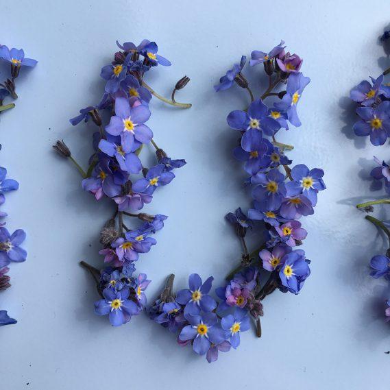Vergissmeinnicht-U, Ein U aus blauen Blüten, Buchstabenliebe, U