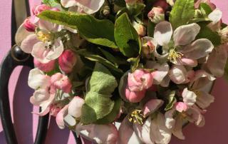 Apfelblüte, Frühling, la vie en rose, Samstag, Lieblingstag,Lebensfreude, Schere, Gartenlust