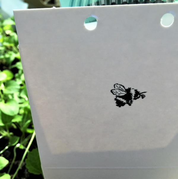 Wunderle Blumenwiese, Bienenglück, Lieblingsblumen, Garten, Bienenrettung, Naturschutz, Geschenkideen, die kleinen Freuden, Summ, summ, summ...