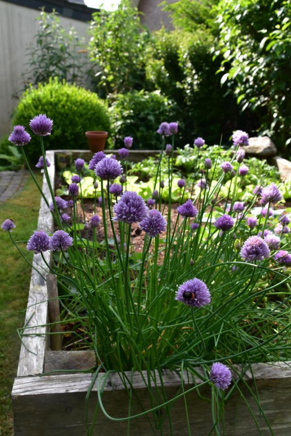 Hochbeet, Gartenglück, gärtnern, eigene Ernte, grünes Glück
