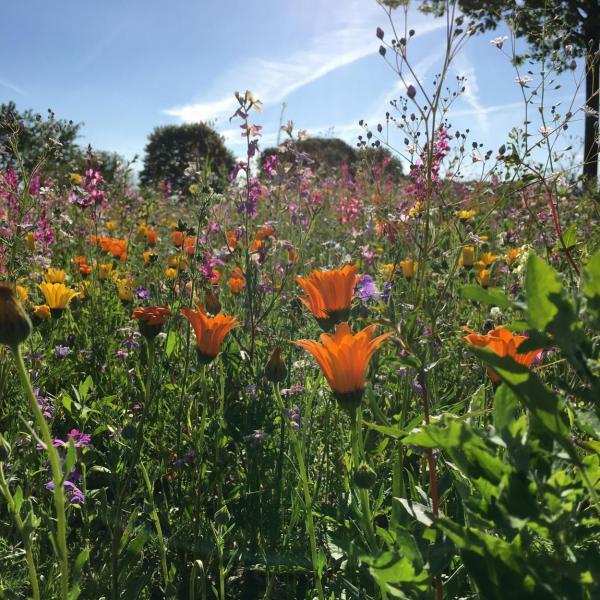 Bunte Blumenwiese, Bienenglück, Bienenrettung, Blumenliebe, Blumen helfen immer, kunterbunt, Sommer, Draussenzeit, Blumen helfen immer