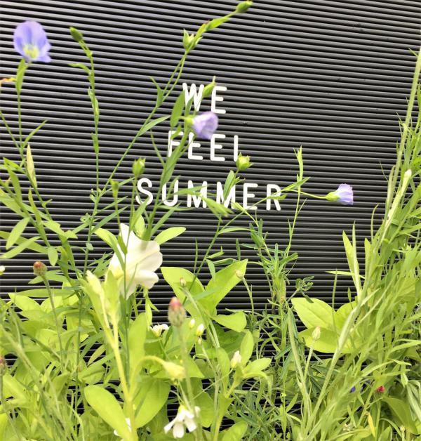 Letterboard, We feel summer, Blumen, Sommerglück, Bienenlieblingsblumen, Leichtigkeit, Sonnenschein