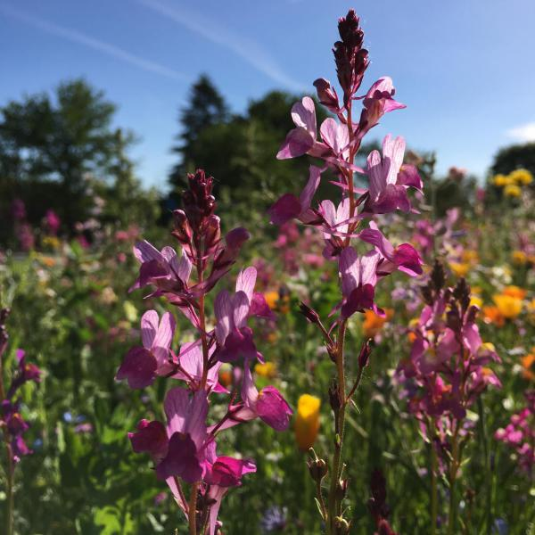 Blumenwiese kunterbunt, Bienenrettung, Blumenglück, Sommerzeit, Draussenzeit, Blumen helfen immer