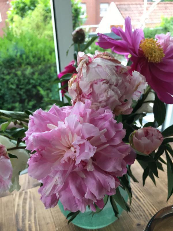 Pfingstrosen, Lieblingsblumen, Sommerglück, Blumen helfen immer, aufgeblüht