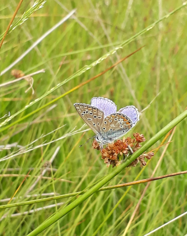Schmetterling, Natur, Wiese, Naturschutz, Insektenrettung