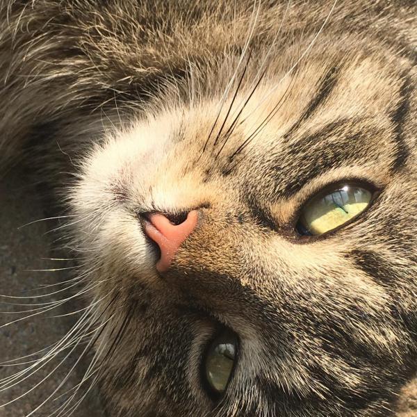 Katzenkopf, catlover, entspannt, gechillt, cool cat, Katzenliebe
