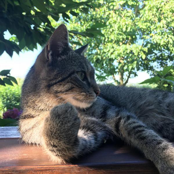 Kater, cat lover, Katzenfreund, Schmusekater, Pause