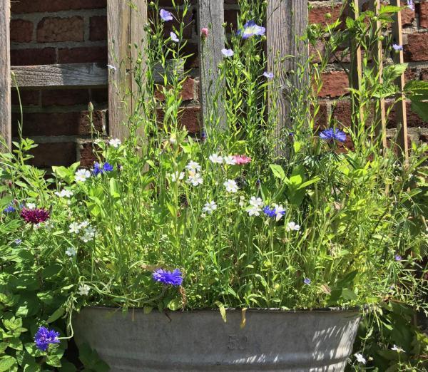 Zinkwanne, Bienenlieblingsblumen, Bienenrettung, Sommerblumen, Gartenlust