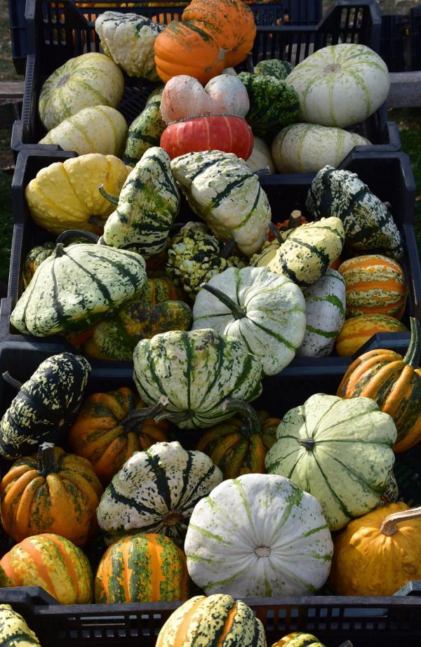 Kürbisse, Herbst, lecker und schön, Herbstfarben