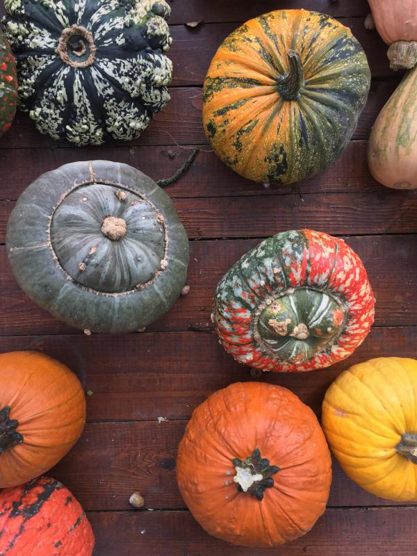 Kürbis, Herbstboten, Kürbisparade, lecker, Dekoration