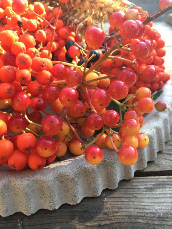 Rote Vogelbeeren, Herbst, Vorfreude, Beton
