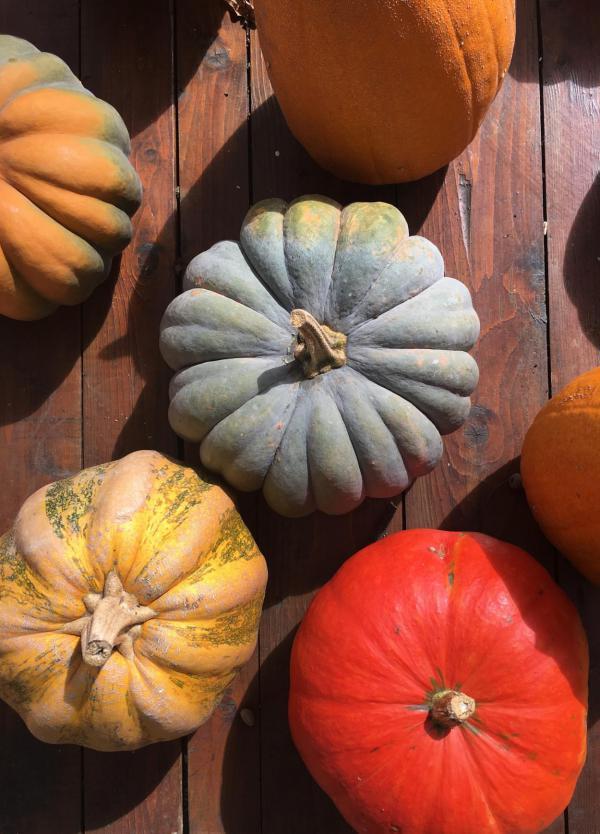 Kürbisse bunt gemischt, Herbst, farbenfroh, lecker, deftige Herbstküche