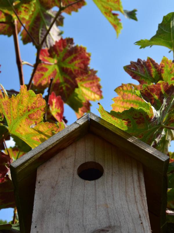 Vogelhäuschen, Weinlaub, Herbstverfärbende Blätter, blauer Himmel