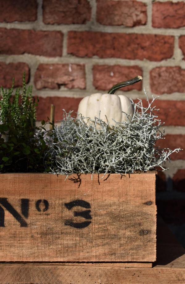 Herbstdeko, Silberkraut, weißer Kürbis, schlicht und ergreifend, Holzkiste