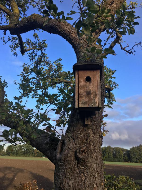Vogelhaus, ausgeflogen, leer