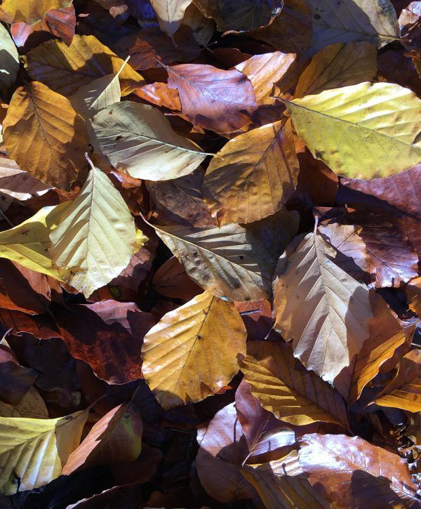 Herbstlaub, Herbstblätter, Herbst, Draussenzeit, Spaziergang