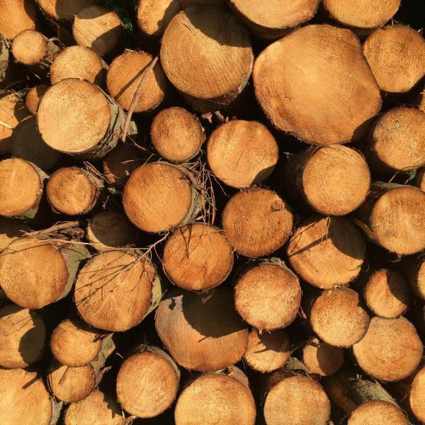 Holz, gesägt, Brennholz, Herbst