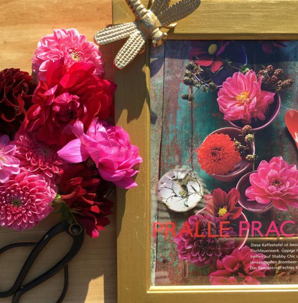 Herbst, DIY, Dahlien, Pralle Pracht, La vie en rose