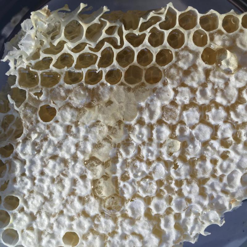 Honig, Wabe, Bienenrettung,, lecker, süß