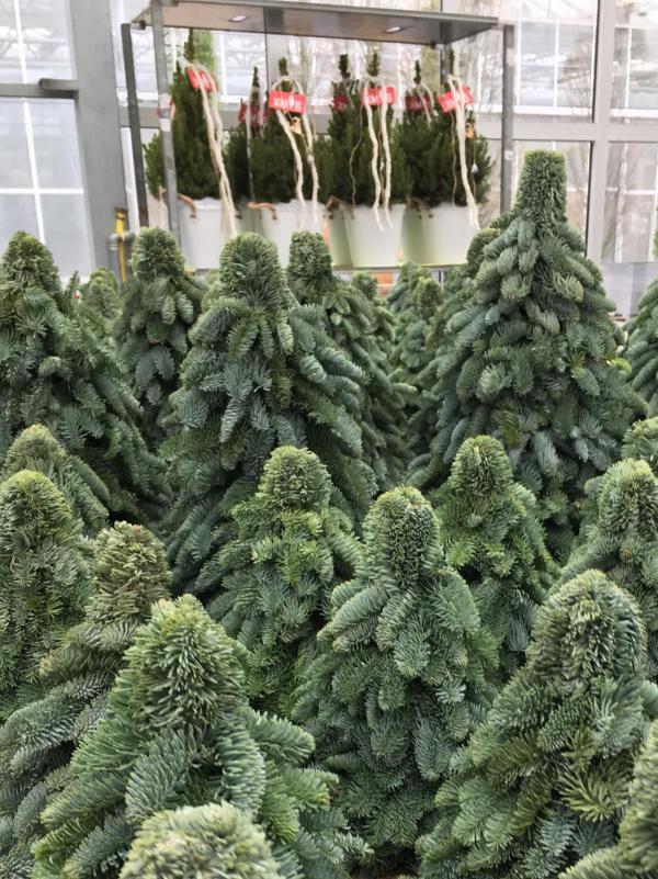 Tannenbaum, kleine Version, DIY, gewickelt, Weihnachten, Advent
