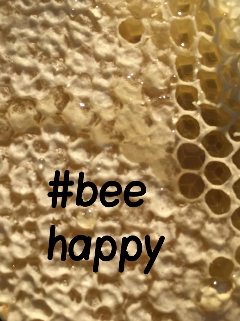 Wabe, Bienen, Bienenrettung, bee happy, Naturschutz, Engagement, die kleinen Dinge