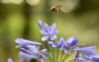 Bienenrettung, fliegende Biene, to bee, Bienen helfen, Bienenblumen, Wunderle, gefertigt in Werkstätten für behinderte Menschen