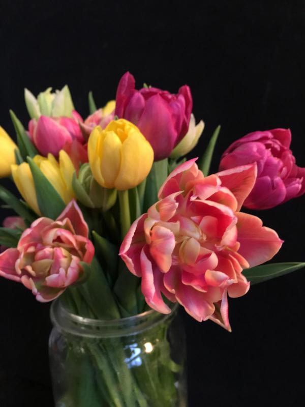 Tulpen, Blumen, Fruehling, Geschenk