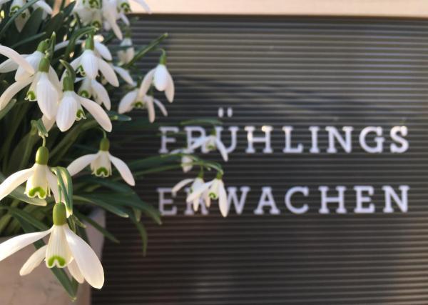 Letterboard, Frühling, Schneeglöckchen, Frühlingserwachen