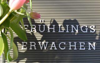 Frühlingserwachen, Letterboard, Tulpen, Frühling