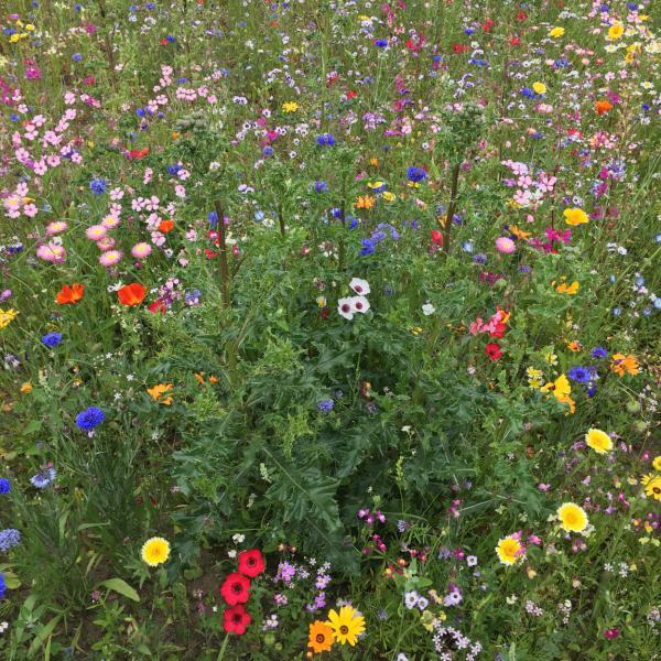 Bunte Blumenwiese, save the bees, Bienenrettung, lecker