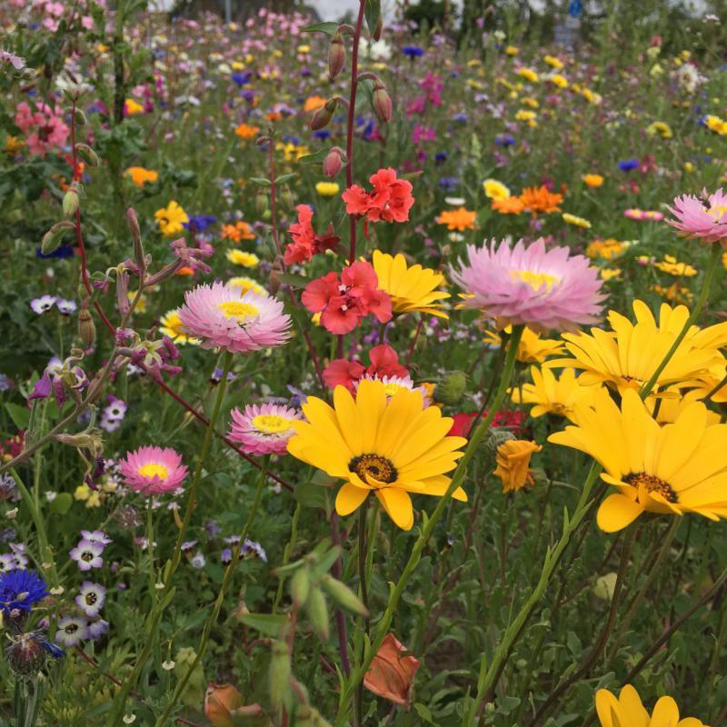 Bienenblumenwiese, Bienenrettung, save the bees, einfach und effizient, Lieblingsbienenblumen