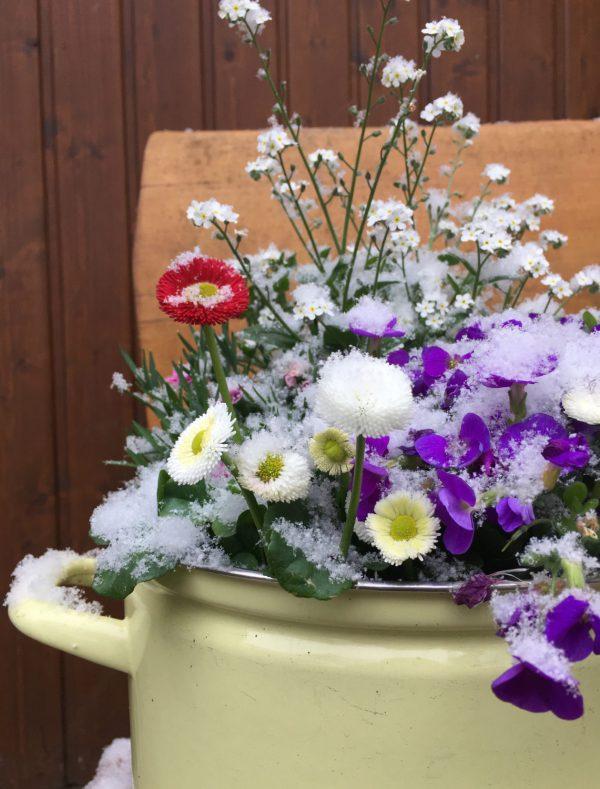 Frühlingsblumen, Schnee, Ostern, der April macht was er will