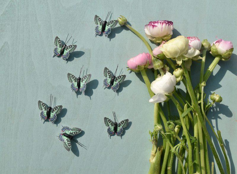 Schmetterlinge, Wunderledetail, Frühling, Draussenzeit, Ostern, Leichtigkeit