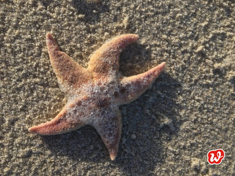 Seestern, gestrandet, Meer, Strandzeit