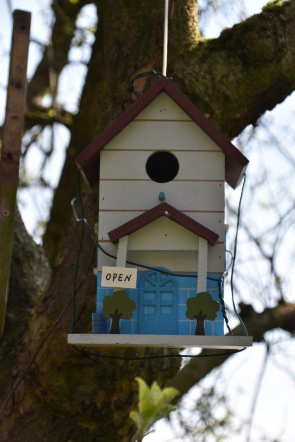 Vogelhaus, Frühling, Nistsaison, alle Vögel sind schon da, Nachwuchs