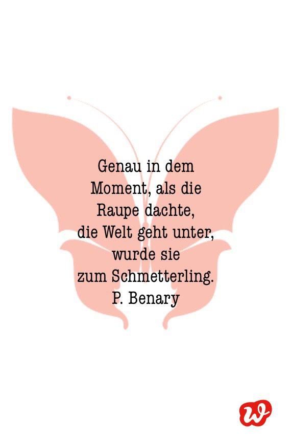 Schmetterling, Schmetterlingsquote, Lettering, Spruch