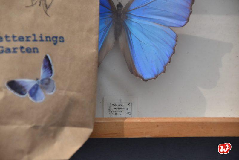 Wunderle, Schmetterlingsgarten, Wundertüte, Geschenk, Geschenkideen, Schmetterling, Natur, Insektenschutz