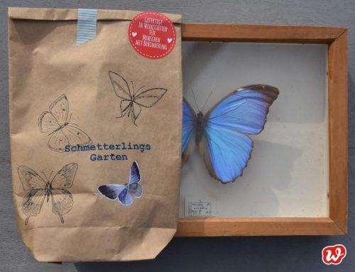 Schmetterling, du leichtes Ding. Der Juni – im Zeichen des Schmetterlings