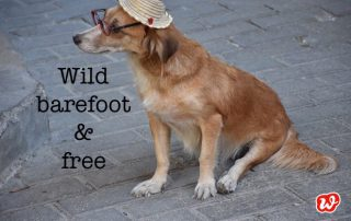 Kubanischer Hund, Sommerlook, wild barefoot & free, Lässigkeit