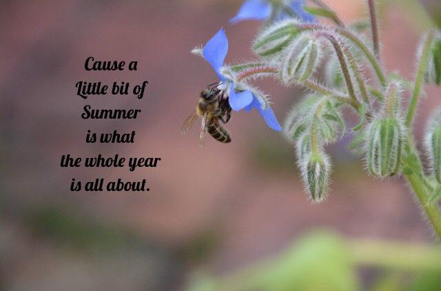 Biene, Bienenrettung, save the bees. Sommerspruch, insektenfreundliche Gärten