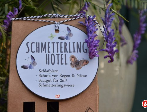 Schmetterlingsrettung: Mit dem Schmetterlingsgarten und dem Schmetterlingshotel ins Paradies einladen!