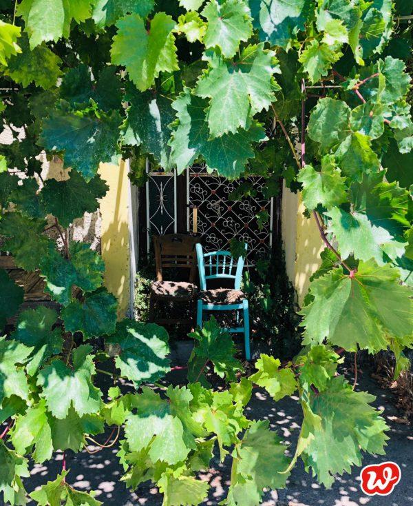 Weinlaub, Urlaub, Sommer, lauschiges Plätzchen, Auszeit,Samos