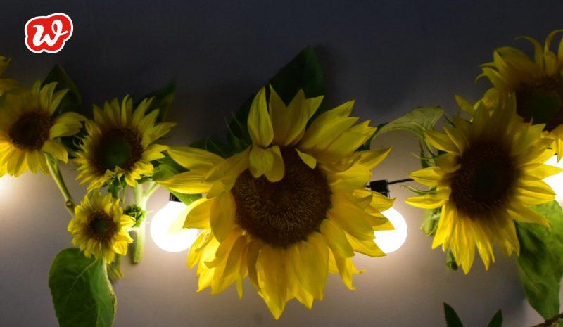 Sonnenblumen, Girlande, Lichterkette, Dekoration, Sommer