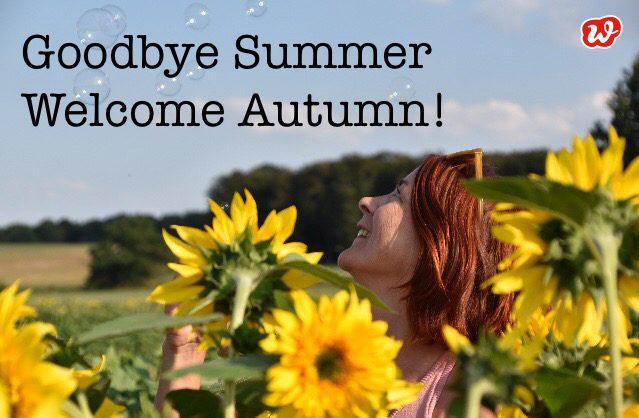 Sonnenblumenfeld, Goodbye Summer, Seifenblasen, Blumenfeld, Spätsommer, Herbst