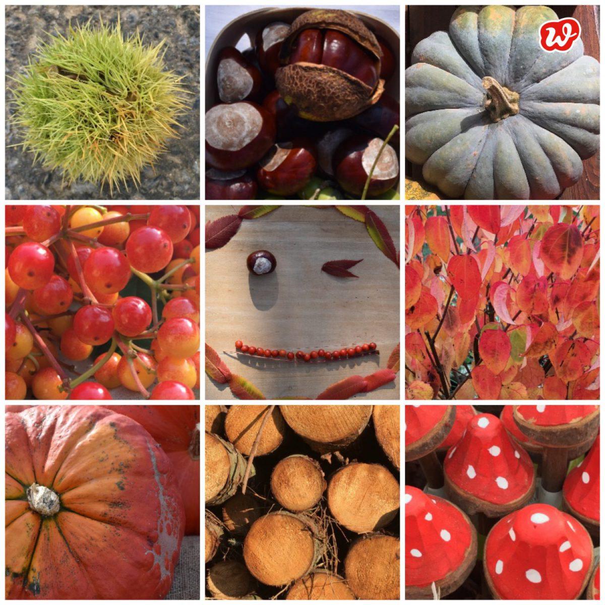 Herbstcollage, Herbst, Herbststimmung, Herbstfarben, Natur, Blätter, Früchte, Pilze