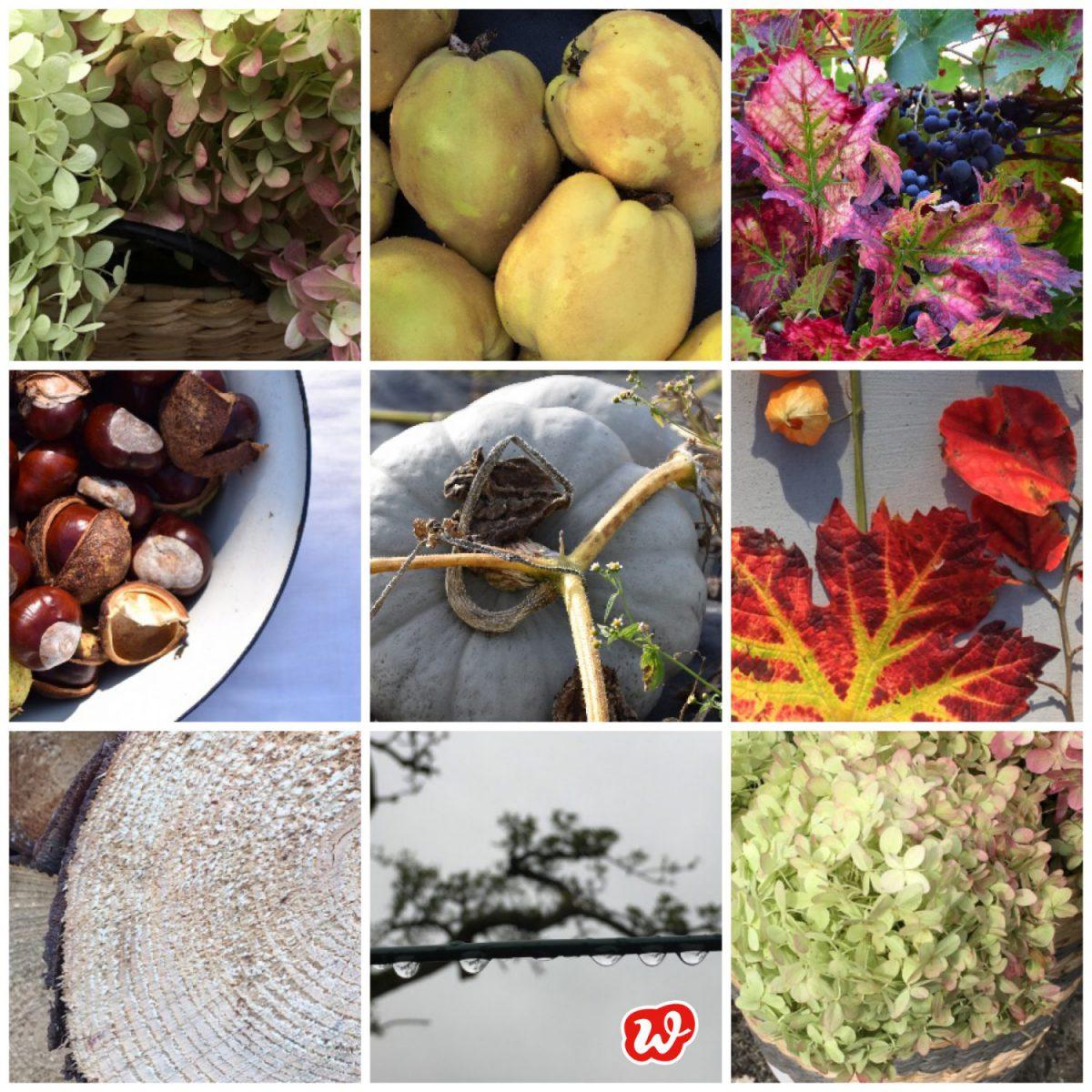 Herbstcollage, Herbst, Erdfarben, Natur