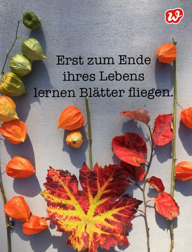 Herbstboten, Herbstblätter, Herbstquote, Lettering, Statement
