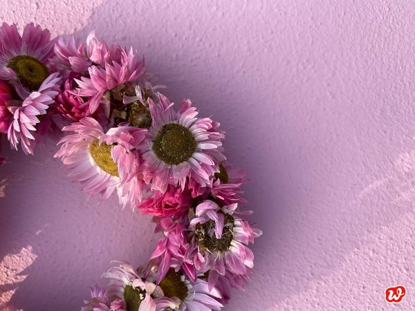 Ausschnitt rosa Strohblumenkranz