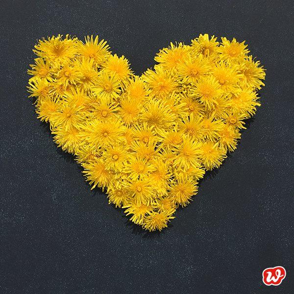 Gelbes Herz aus Löwnzahnblüten