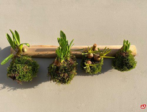 DIY-Frühlingsmooskugeln – Warm gebettet in die grüne Jahreszeit